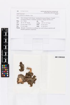 Sticta fuliginosa, AK336322, © Auckland Museum CC BY