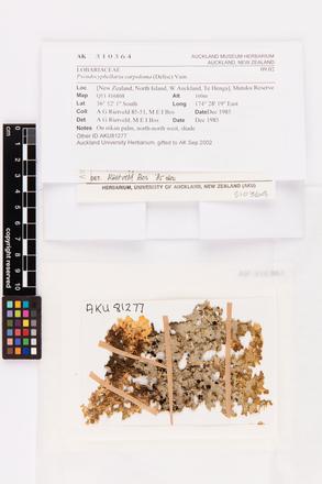 Pseudocyphellaria carpoloma, AK310364, © Auckland Museum CC BY
