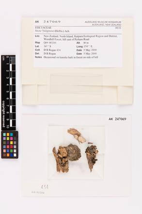 Sticta fuliginosa, AK247069, © Auckland Museum CC BY