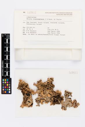 Sticta cinereoglauca, AK169811, © Auckland Museum CC BY