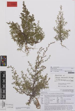 Kunzea tenuicaulis