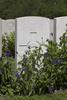 Headstone of Lance Corporal Frank Cecil Wotten (24/938). Lijssenthoek Military Cemetery, Poperinge, West-Vlaanderen, Belgium. New Zealand War Graves Trust (BECL9689). CC BY-NC-ND 4.0.